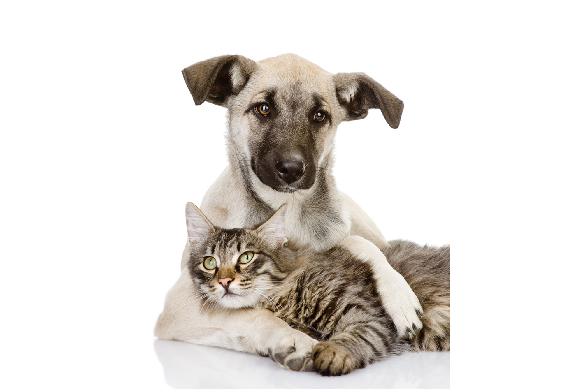 Does Covid-19 affect your pets?