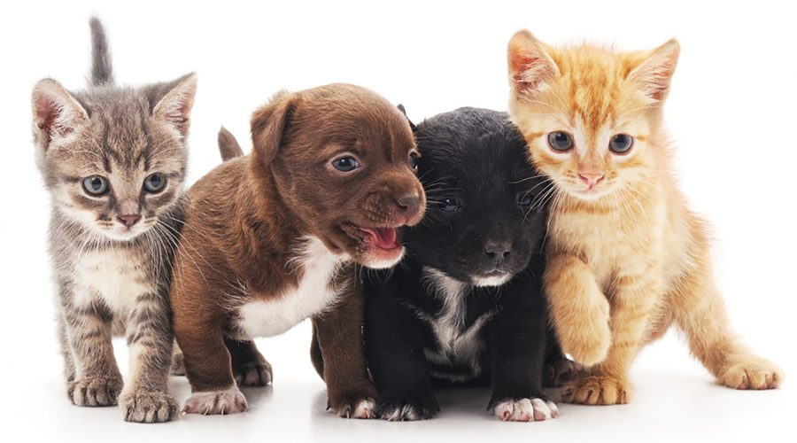 Fostering Pets & What to Expect