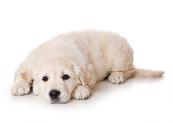 Adorable dog lying on the floor