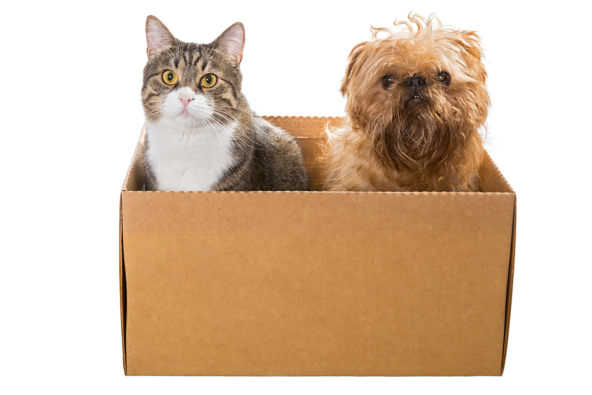 Image of a very cute kitten and puppy in a cardboard box