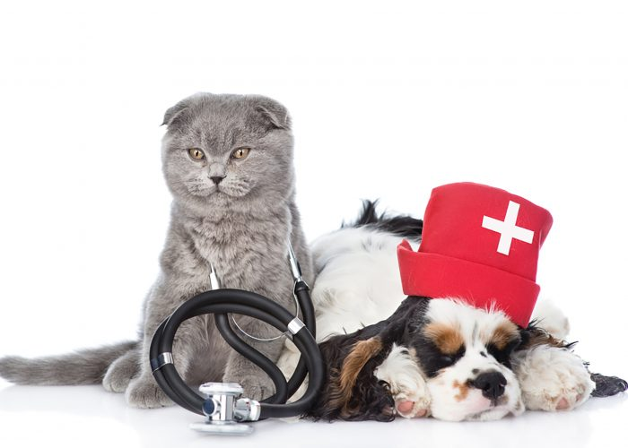 Image of a cat and dog not feeling well