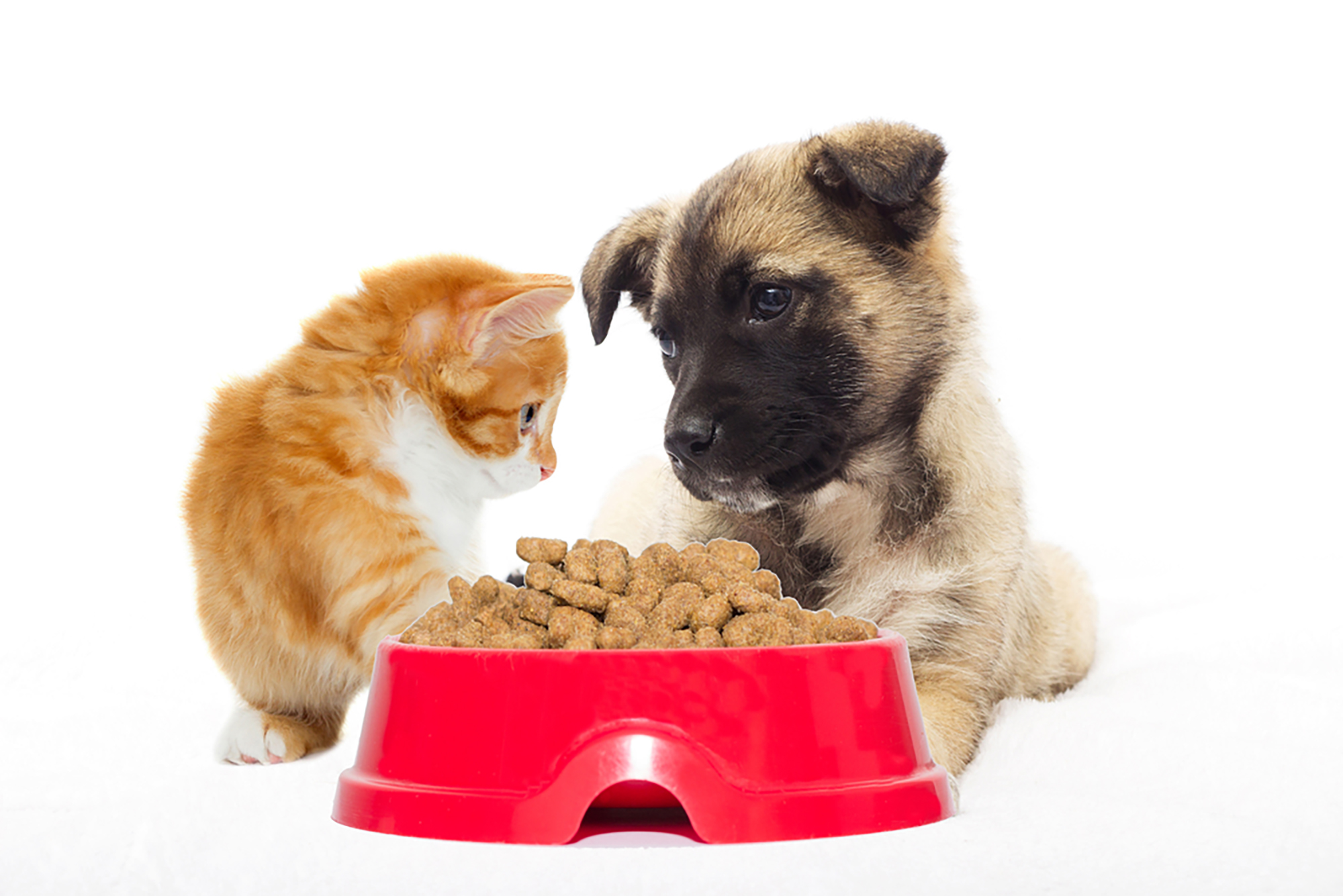 A cat and a dog seated next to a huge bowl of dry food