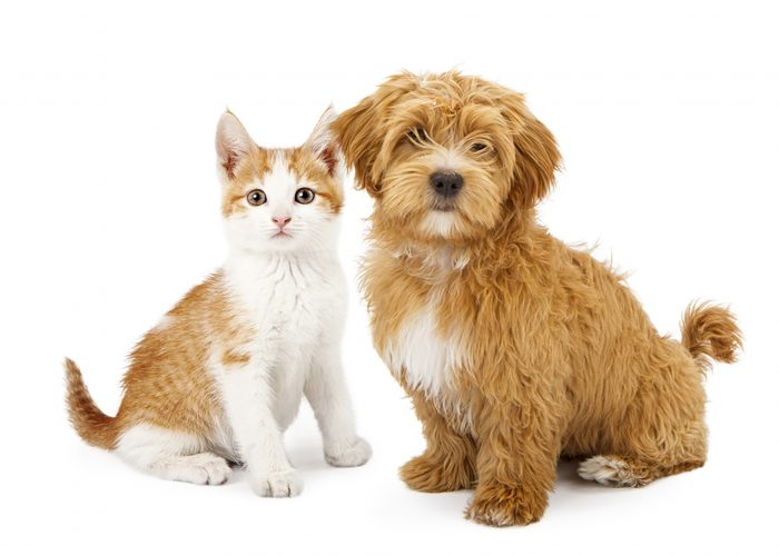 A kitten and puppy ready for summer fun