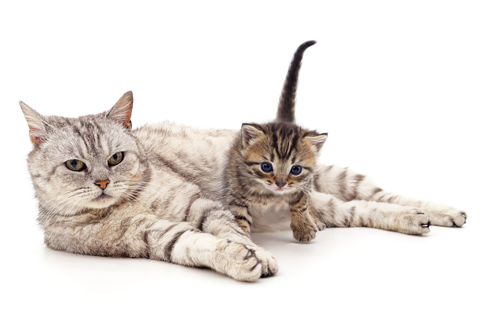 Image of a cat and kitten sitting together